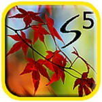 Galaxy S5 Autumn Leaves LWP